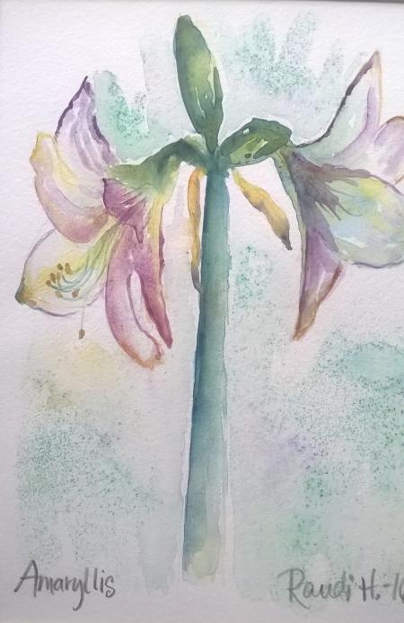 Amaryllis (indrammet 40x50)